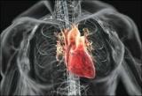 Шкіра впливає на артеріальний тиск людини і частоту серцевих скорочень - дослідження
